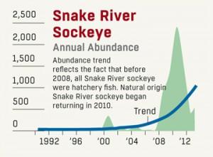 Snake River Sockeye 360